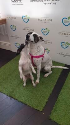 RSPCA VIP Doggie Fundraiser at The Exchange Hotel Balmain photo 3