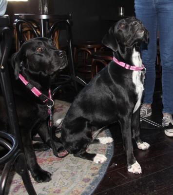 RSPCA VIP Doggie Fundraiser at The Exchange Hotel Balmain photo 10