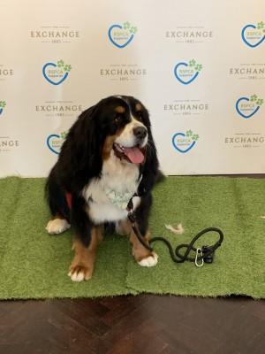 RSPCA VIP Doggie Fundraiser at The Exchange Hotel Balmain photo 20