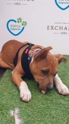 RSPCA VIP Doggie Fundraiser at The Exchange Hotel Balmain photo 1