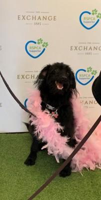 RSPCA VIP Doggie Fundraiser at The Exchange Hotel Balmain photo 18