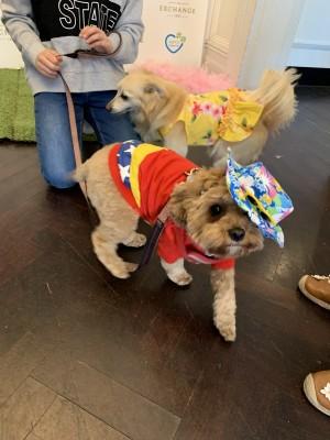 RSPCA VIP Doggie Fundraiser at The Exchange Hotel Balmain photo 13