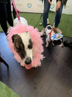 RSPCA VIP Doggie Fundraiser at The Exchange Hotel Balmain photo 9
