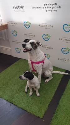 RSPCA VIP Doggie Fundraiser at The Exchange Hotel Balmain photo 6