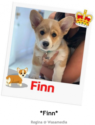 Fang's Pet of the Year 2020 photo 6