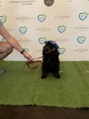 RSPCA VIP Doggie Fundraiser at The Exchange Hotel Balmain photo 2